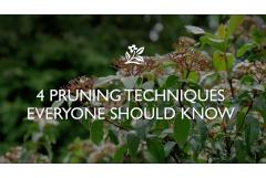 4 Pruning Techniques
