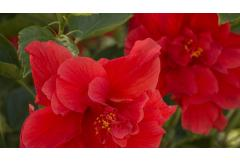 10 Shrubs That Look Great in July