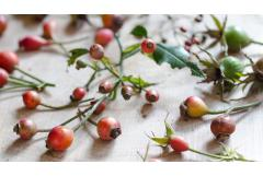 It's the Season for Foraging Rose Hips