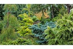 Dwarf Conifers Offer Big Solutions