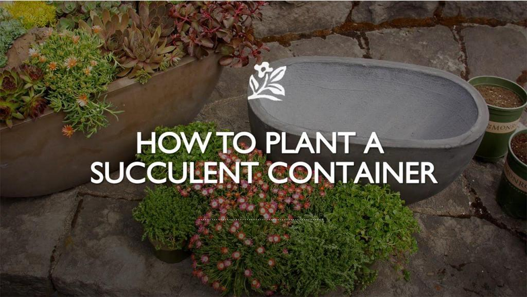 How to Plant a Succulent Container