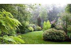 A lush backyard family garden with shrubs, trees, flowers, and a pathway of grass through the center