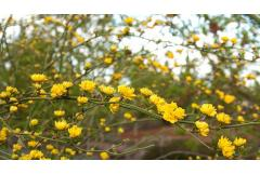 5 Shrubs That Look Great in April (Z: 8 - 11)