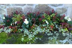 Easy and Colorful Winter Planter