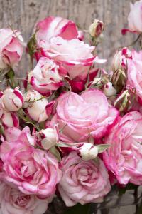 Cut Flowers :: Credit :: Doreen Wynja