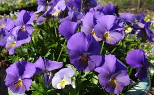 Close Up :: Credit :: Plant Haven