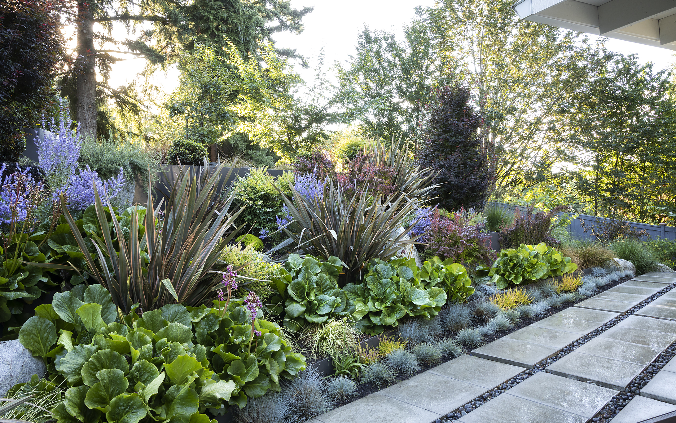 layered border with russian sage and blue fescue