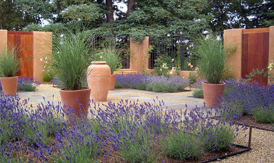 lavender and maiden grass with terra cotta urns and garden walls