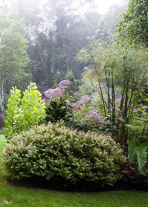 shrubs and trees in a woodland garden